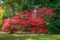 Westonbirt Arboretum (Gloucestershire, England) by Iso Max Photography