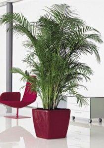 Plant, natural #werkplek