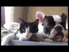 Funny Birds,Cats,And Dogs Videos //best funniest -  #bird #birds  #birding #animale #bird_watchers_daily #animal #birdwatching #pets #nature_seekers #birdlovers The best things is home to the top trending clips, most entertaining memes, and funniest animal videos online. Simply put, we think animals are the best ever. If you agree, let's make it ... - #Birds