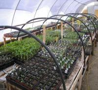 Prairie Flora - Manitoba Native Prairie Plants, annual sale at Living Prairie Museum