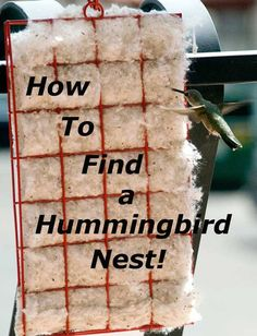 How to Find a Hummingbird Nest! Follow mother hummingbird to her nest when she takes the nesting material.