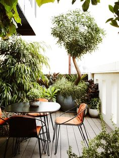 North East corner of the balcony. To the left, Ficus longifolia 'Ali', and in the far corner, Cussonia spicata (tall tree with trunk). Outdoor dining setting by TAIT. Photo – Annette O'Brien for The Design Files.
