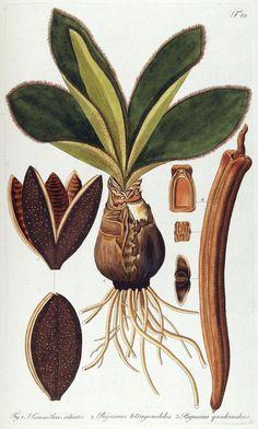 6 Gorgeous Botanical Downloads #free #printables