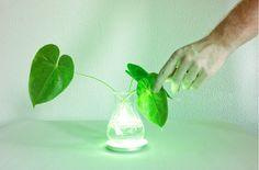 Make a Houseplant Into a Lamp, via German Ingenuity - Design - The Atlantic Cities