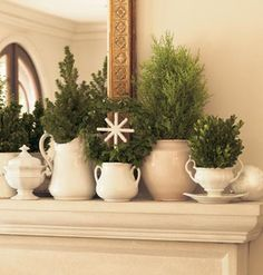 White and green plant, winter, tree, green, holidays, white dishes, topiari, christmas mantles, christmas mantels