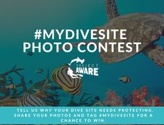 Photo Contest: Why is Your Dive Site Worth Protecting? Site Worth, Pet Recycling, Marine Debris, Volunteer Work, Playgrounds, Natural Resources, Photo Projects, Ocean Life, Volunteers