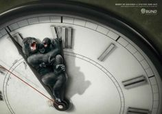 Powerful Animal Ad Campaigns