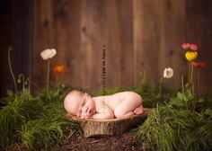 newborn outside idea brought inside! Love it!