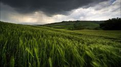 Wheat Field AND my favorite clouds?!? I would PAY to be there right now. OBSESSING!!!