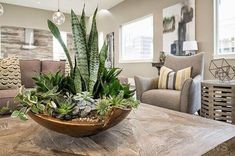 Perfect Living room 11 DIY Indoor Plants Ideas to Fill Your Living Room With Greenery 12 Landscaping Jardim Zen Interior, Interior Plants, Interior Design, Indoor Zen Garden, Best Indoor Plants, House Plants Decor, Plant Decor, Grand Cactus, Sansevieria Plant
