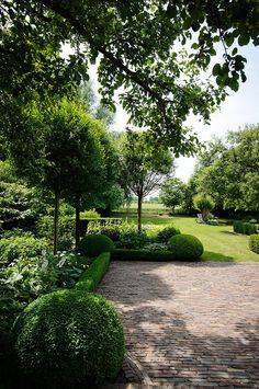 Boxwood hedge Drought tolerant when established - Gardening Boxwood Landscaping, Boxwood Garden, Boxwood Hedge, Potager Garden, Backyard Landscaping, Backyard Ideas, Dwarf Boxwood, Evergreen Garden, Landscape Design