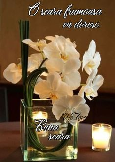 Vertical Succulent Gardens, Succulent Planter Diy, Hanging Succulents, Succulents Diy, Succulent Wedding Centerpieces, Terrarium Wedding, Wedding Arrangements, Floral Arrangements, Peony Bouquet Wedding