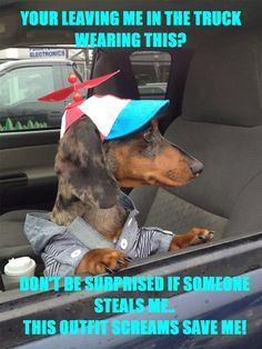 Top dachshund videos and wiener dog pics for fun and laughs to brighten your day. We also post wiener dog gift guides and other doxie news. Dachshund Funny, Dachshund Love, Funny Dogs, Dachshund Rescue, Daschund, Dachshund Facts, Dachshund Clothes, Dachshund Puppies, Lab Puppies