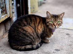 Any cat lovers out there? This cat was posing like a pro lol . . . #photography #tamron #amateurphotography #street #kitty #exploring #nikon #nikon�� #nikonUSA #DSLR #InstaShoot #brooklyn #nikonD3330 #bushwick #streetphotography #window #fotografía #b&w #Student #�� #cat #animallover http://butimag.com/ipost/1558962486240982307/?code=BWijB8ajbUj