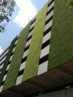 muro verde en Buenavista