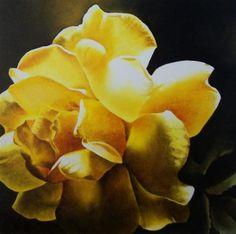 """Last Light, Yellow Rose"" - Original Fine Art for Sale - © Jacqueline Gnott"