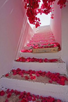 Architecture Discover Bougainvillea blossoms in Santorini Greece. For my best friend Jenn who loved bougainvillea. Rosa Pink Stairway To Heaven Santorini Greece Paros Greece Santorini Island Paros Island Santorini Travel Color Rosa Pink Color Beautiful World, Beautiful Places, Beautiful Stairs, Beautiful Flowers, Beautiful Scenery, Amazing Places, Valentine's Day, Stairway To Heaven, Belle Photo