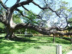 Jardin de la hacienda de Simon Bolivar en (Santa Marta Colombia) Santa Marta, Places Ive Been, Past, To Go, Texas, Houston, Travel, Random, Gardens