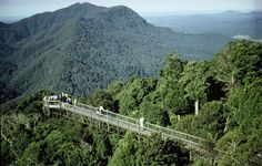 Dorrigo National Park Skywalk / Wind your way up Waterfall Way past Bellingen towards Dorrigo. Before you reach the quaint town of Dorrigo take a right hand turn to the Dorrigo National Park and Rainforest Centre. At the nearby Dorrigo Rainforest Centre, learn why these World Heritage forests are globally significant, step out above the trees on the remarkable Skywalk and experience nature on a short walk from the Centre.