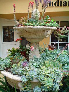 Succulent Fountain - Photo by Maureen Gilmer