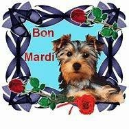 Bon Mardi, Mirrored Sunglasses, Dogs, Animals, Frases, Good Night, Bonjour, Dog, Handsome Quotes