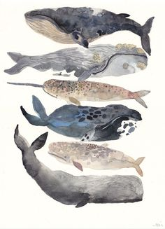 Stacked whale illustration by Michelle Morin Art And Illustration, Illustrations, Watercolour Illustration, Painting & Drawing, Watercolor Paintings, Whale Painting, Watercolor Paper, Watercolor Tattoos, Watercolor Ideas