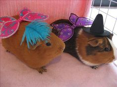 https://fluffypiggies.wordpress.com/tag/national-dress-up-your-pet-day/