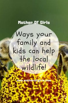 Ways your family and kids can help the local wildlife/saving animals/parenting/kids activities/saving bees/saving our planet/ways to help nature/gardening/kids crafting/nature/plants/homes