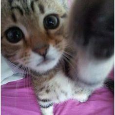 Gattino (Nasrin Mohebbian - G+) Baby Zoo Animals, Baby Cats, Animals And Pets, Cats And Kittens, Funny Animals, Cute Animals, Kitty Cats, Cute Little Kittens, Cute Cats