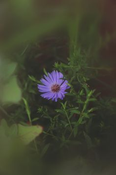 3 Soft-Focus Lens Effects You Can Make Right Now | Free People Blog #freepeople