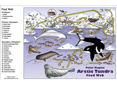 Arctic – Polar Region Food Web Activity