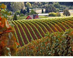 Oregon Wine Country -