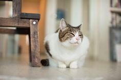 "Artist/Designer Sakai Keito × Tonbo  — ""I wanna become a cat"""