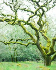 Mossy Woods photograph by Lupen Grainne on Etsy.