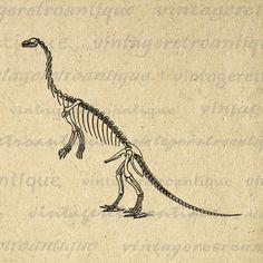 Digital Graphic Dinosaur Skeleton Image Download Printable