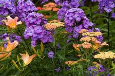 very usual (and masterful) plant color combination: phlox, achillea 'Forncett Fletton', hemerocallis Landscaping Inspiration, Plants, Deck Garden, Lawn And Garden, Plant Combinations, Pretty Gardens, Perfect Plants, Landscaping Plants, Colorful Garden