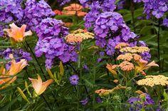 plant combination: phlox, achillea 'Forncett Fletton', hemerocallis (daylily)