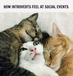 If you are an introvert and want some good laugh then here are relatable introvert memes that will speak your mind for you! Funny Animal Pictures, Cute Funny Animals, Cute Cats, Animal Pics, Cute Jokes, Funny Cute, Gato Gif, Introvert Humor, Introvert Problems