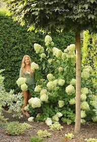 Lecę w kulki...: Jak przycinać hortensje bukietowe ? Garden Design, Landscape, Fotografia, Lawn And Garden, Landscape Designs, Landscaping, Yard Design