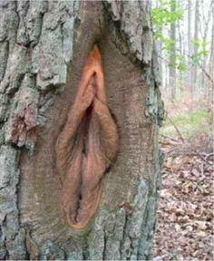 Trees are amazing! Lol