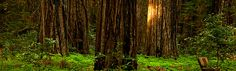 Hendy Woods State Park.  Camping, hiking and wine tasting in Anderson Valley. On  the list for future destinations. :)