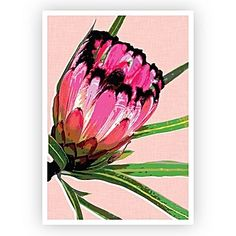 Enjoy the wonders of our Australian flora with this beautiful wall art set consisting of 3 individual prints. Included in the pack is Protea Pink; Protea Teal and Protea Peach. Cheap Wall Art, Wall Art For Sale, Wall Art Sets, Wall Art Prints, Canvas Prints, Protea Art, Protea Flower, Flowers, Kitchen Artwork
