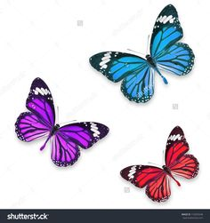 Red Purple And Blue Butterflies Isolated On White With Soft Shadow Beneath Each Стоковые фотографии 110355548 : Shutterstock
