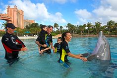 Make Family Memories with Dolphins at Atlantis Dolphin Cay.  Swim or Interact with Atlantic Bottlenose Dolphins