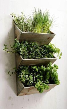 Jardín vertical en la cocina