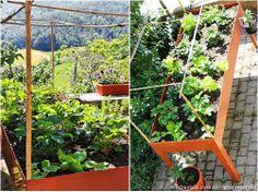 19 best Orto sul balcone images on Pinterest | Herb garden, Herbs ...