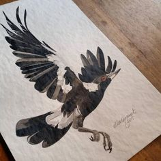 Flying Magpie Study I 2015 by ellaquaint an ink and watercolour illustration on paper Watercolour Illustration, Watercolor, Magpie, Crow, Rooster, Death, Study, Illustrations, Ink
