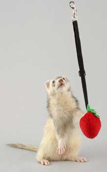 Ferret Pull-N-Go Toy 2pks, Marshall Pet Products - Clip the captivating Marshall Bungee Fleece Toy to the top of your Ferrets enclosure, and watch the fun unfold. Super soft, with a rattle inside and an elastic cord for a bouncing, pouncing, tugging good time. Features: 1. Metal swivel clip easily attaches to wire cages 2. Durable, plush fleece with secure stitching stands up to frisky play