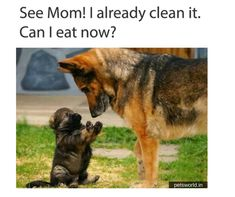 Momma is always momma! Whether it's human or animal <3 They also feel the same for their kids ❤️   #MommaLove #dog #cute #cuteanimals