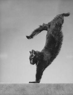 """""""Blackie"""" (photograph by Gjon Mili, 1943)"""